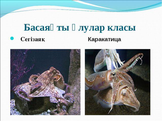 Басаяқты ұлулар класы Сегізаяқ Каракатица