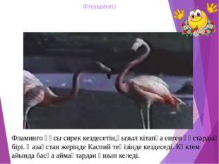 Фламинго Фламинго құсы сирек кездесетін,қызыл кітапқа енген құстардың бірі. Қ