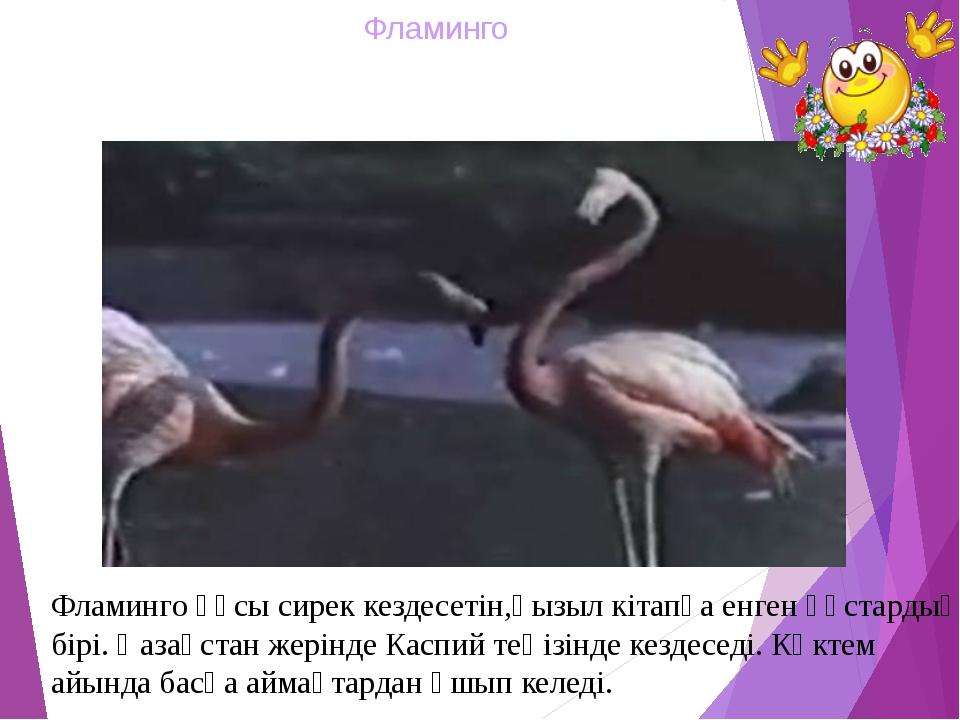Фламинго Фламинго құсы сирек кездесетін,қызыл кітапқа енген құстардың бірі. Қ...