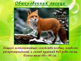 Обыкновенная лисица Хищное млекопитающее семейства псовых, наиболее распростр