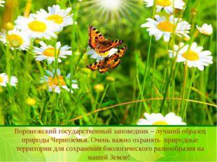 Воронежский государственный заповедник – лучший образец природы Черноземья. О
