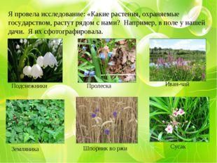 Я провела исследование: «Какие растения, охраняемые государством, растут рядо