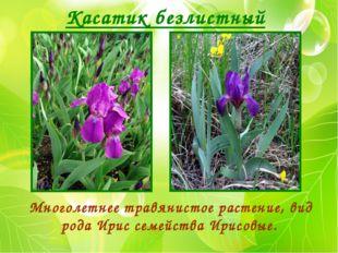 Касатик безлистный Многолетнее травянистое растение, вид рода Ирис семейства