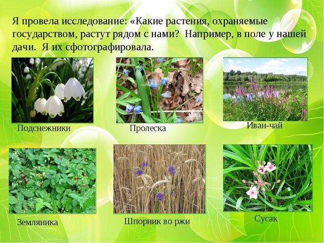 Я провела исследование: «Какие растения, охраняемые государством, растут рядо...