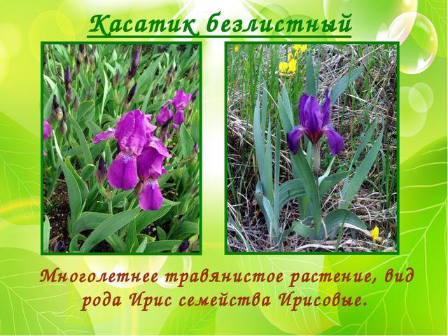 Касатик безлистный Многолетнее травянистое растение, вид рода Ирис семейства...