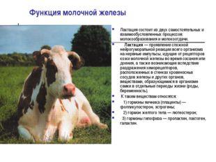 Функция молочной железы Лактация состоит из двух самостоятельных и взаимообус