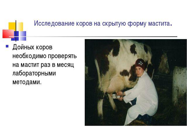 Исследование коров на скрытую форму мастита. Дойных коров необходимо проверят...