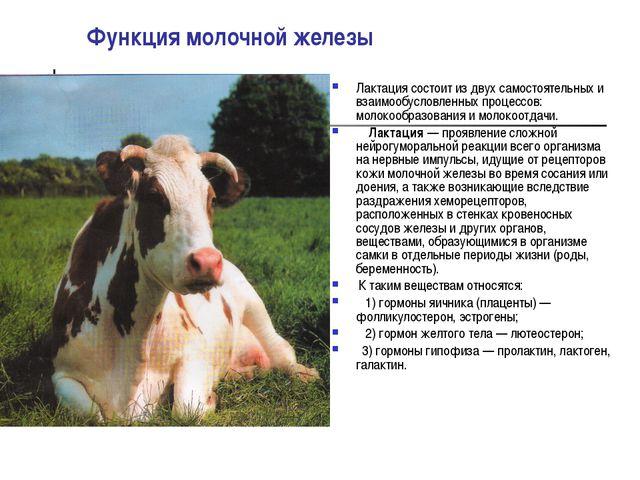 Функция молочной железы Лактация состоит из двух самостоятельных и взаимообус...