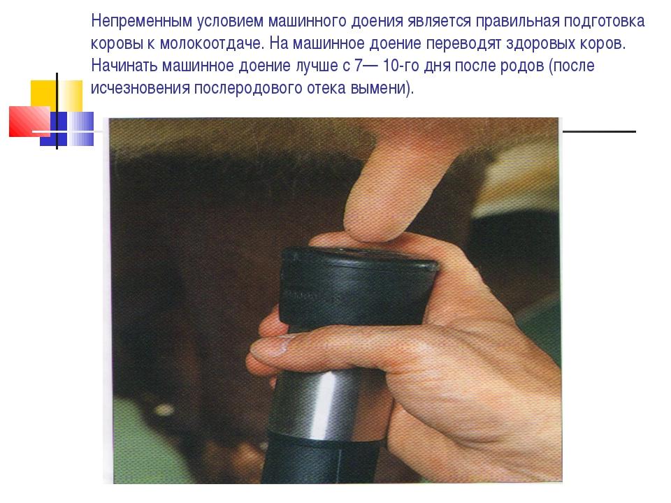 Непременным условием машинного доения является правильная подготовка коровы к...