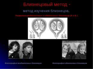 Близнецовый метод - метод изучения близнецов. Развитие неидентичных и идентич