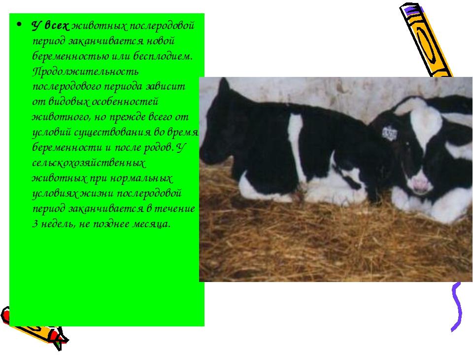 У всех животных послеродовой период заканчивается новой беременностью или бес...