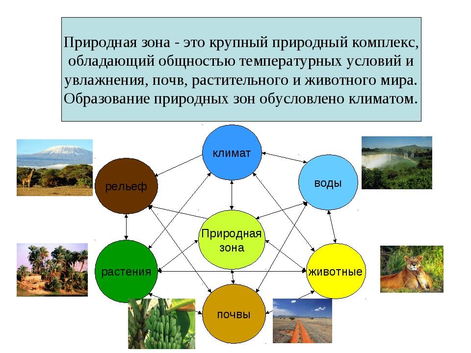 Природная зона - это крупный природный комплекс, обладающий общностью темпера...
