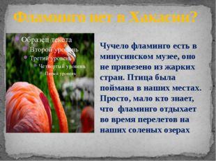 Фламинго нет в Хакасии? Чучело фламинго есть в минусинском музее, оно не прив