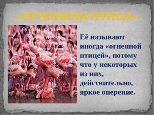 «ОГНЕННАЯ ПТИЦА» Её называют иногда «огненной птицей», потому что у некоторых