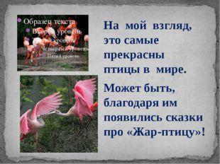 На мой взгляд, это самые прекрасны птицы в мире. Может быть, благодаря им по