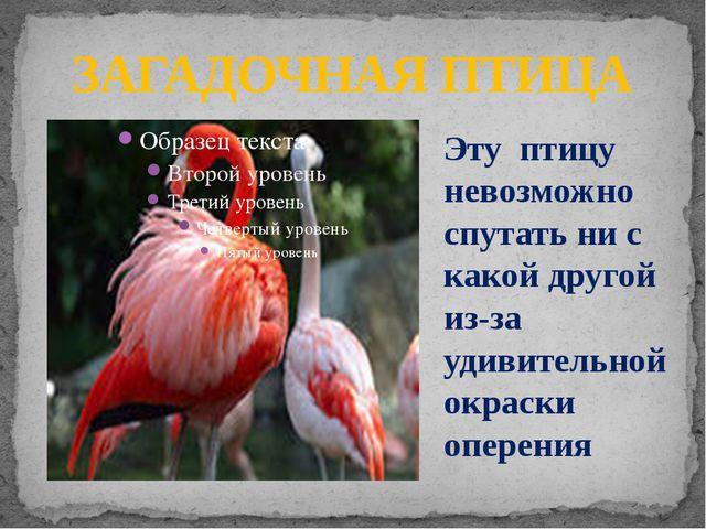 ЗАГАДОЧНАЯ ПТИЦА Эту птицу невозможно спутать ни с какой другой из-за удивите...