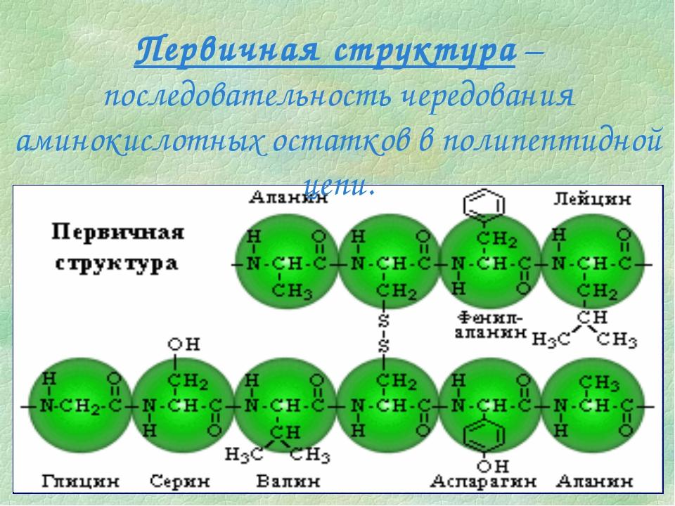 Первичная структура – последовательность чередования аминокислотных остатков...