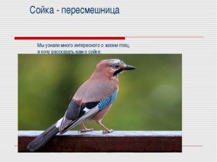 Сойка - пересмешница Мы узнали много интересного о жизни птиц, я хочу расска