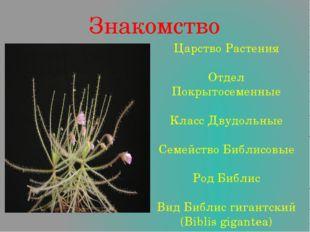 Знакомство Царство Растения Отдел Покрытосеменные Класс Двудольные Семейство