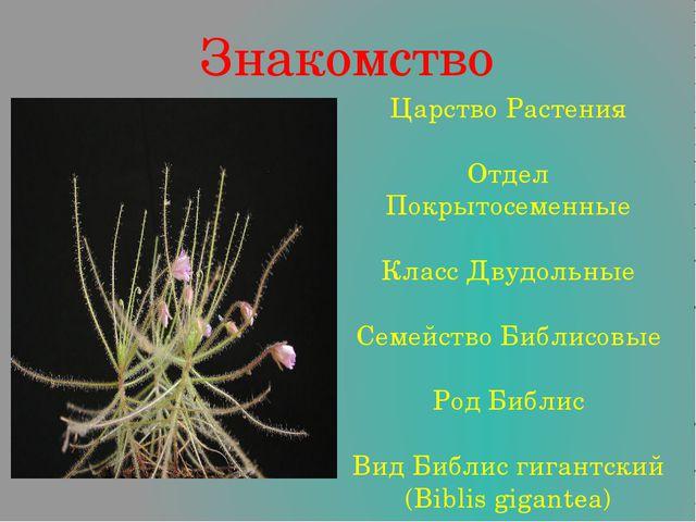 Знакомство Царство Растения Отдел Покрытосеменные Класс Двудольные Семейство...