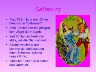 """Sababurg Fast 25 km lang und 12 km breit ist der """"Sabawald"""". Kein Förster dar"""