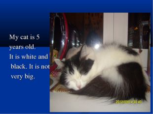 My cat is 5 years old. It is white and black. It is not very big.