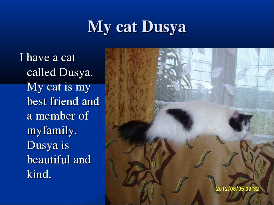 My cat Dusya I have a cat called Dusya. My cat is my best friend and a member...