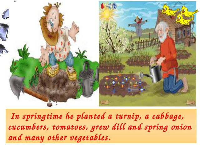 In springtime he planted a turnip, a cabbage, cucumbers, tomatoes, grew dill...