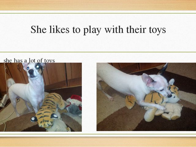 She likes to play with their toys she has a lot of toys her favorite is the t...