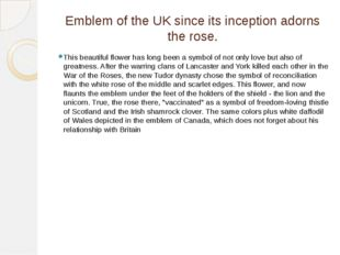 Emblem of the UK since its inception adorns the rose. This beautiful flower h