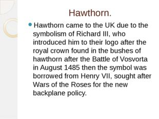 Hawthorn. Hawthorn came to the UK due to the symbolism of Richard III, who in