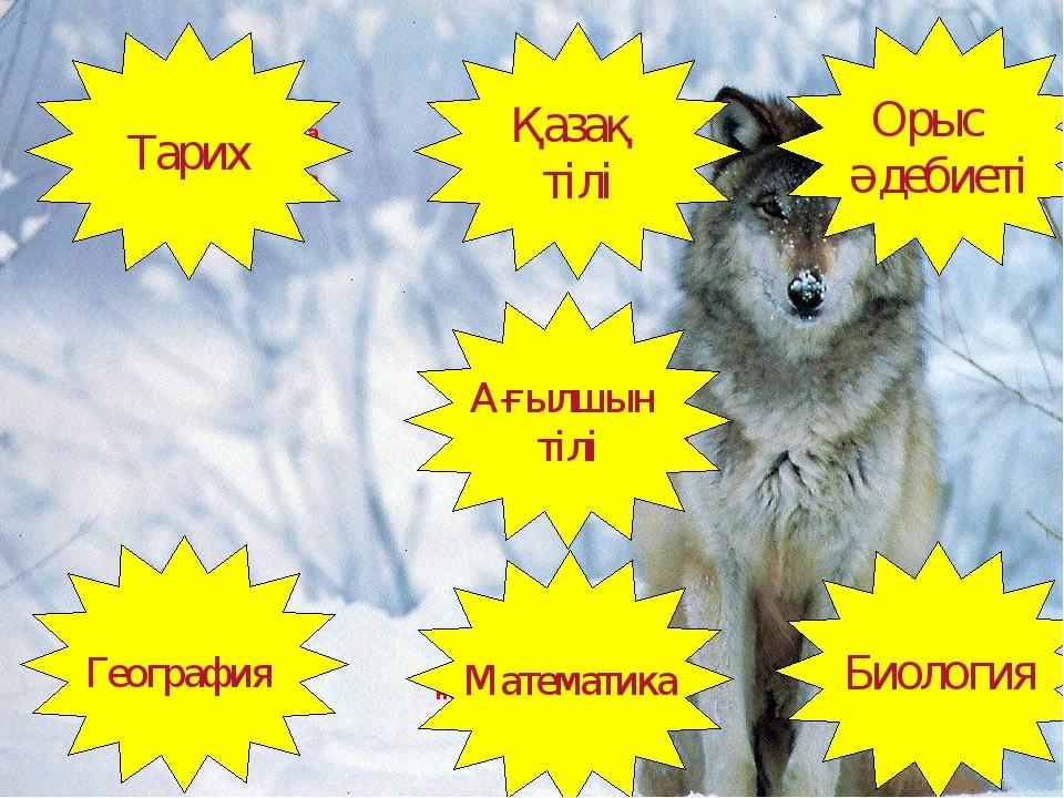 Who did write the conversation «Kokserek»? Қасқырды неге орман санитары дейді...