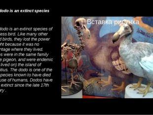 The dodo is an extinct species … The dodo is an extinct species of flightless