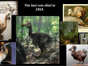The last one died in 1914.