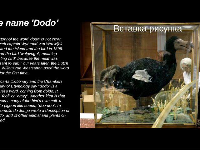 The name 'Dodo' The history of the word 'dodo' is not clear. The Dutch captai...