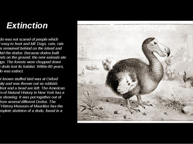Extinction The dodo was not scared of people which made it easy to hunt and k...