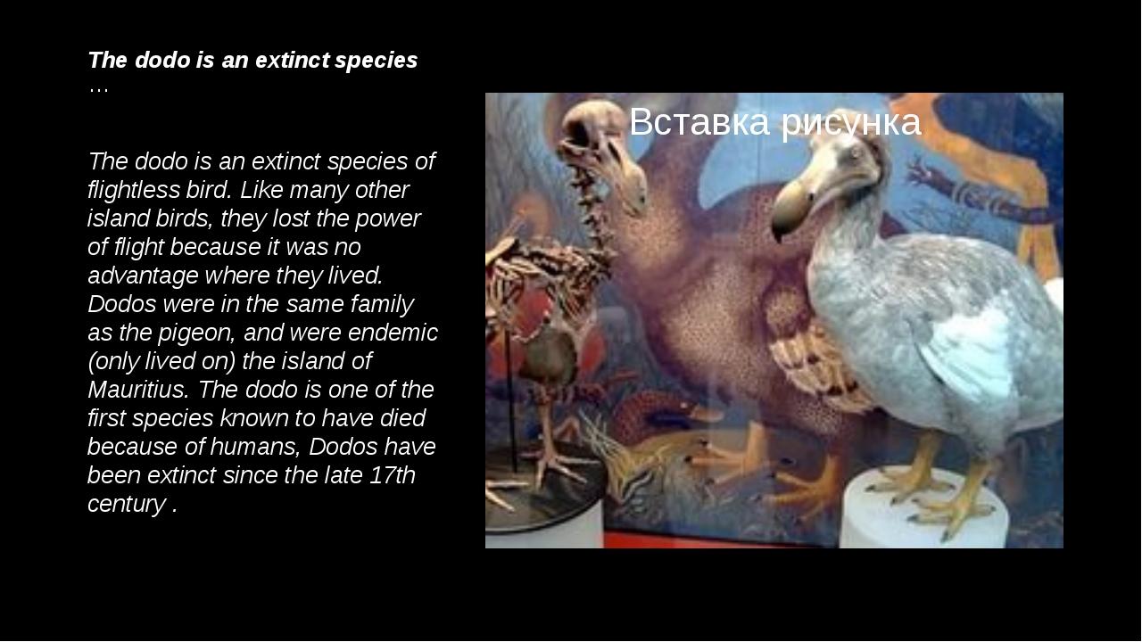 The dodo is an extinct species … The dodo is an extinct species of flightless...
