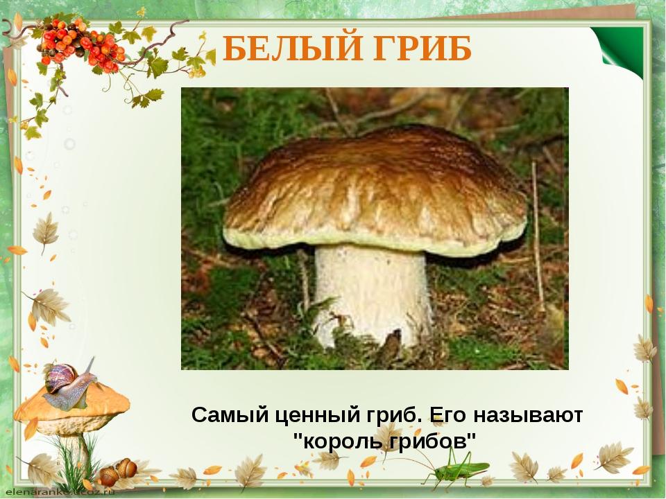 """БЕЛЫЙ ГРИБ Самый ценный гриб. Его называют """"король грибов"""""""