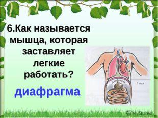 * 6.Как называется мышца, которая заставляет легкие работать? диафрагма