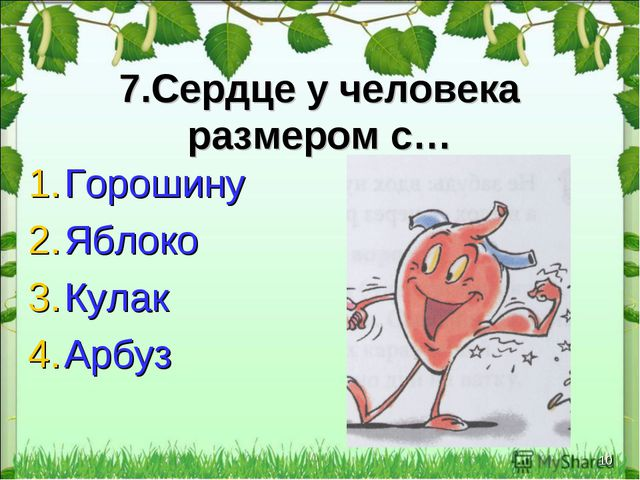 * 7.Сердце у человека размером с… Горошину Яблоко Кулак Арбуз