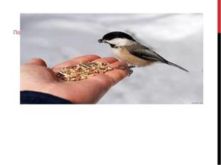 Подкормка животных и птиц