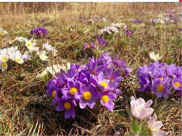 Лесные цветы красноярского края