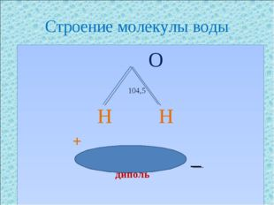Строение молекулы воды O 104,5 H H + диполь