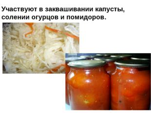 Участвуют в заквашивании капусты, солении огурцов и помидоров.