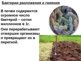 В почве содержится огромное число бактерий – сотни миллионов в 1г. Они перера