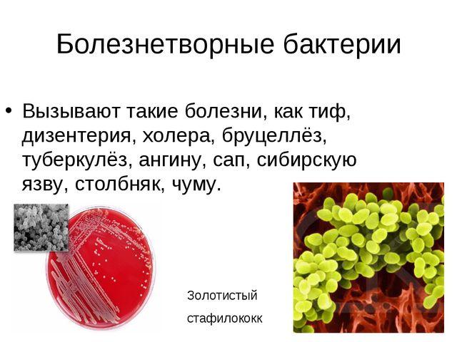 Болезнетворные бактерии Вызывают такие болезни, как тиф, дизентерия, холера,...