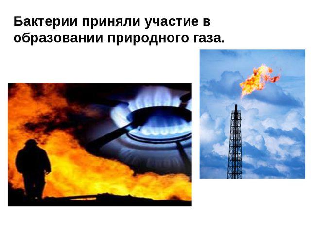 Бактерии приняли участие в образовании природного газа.