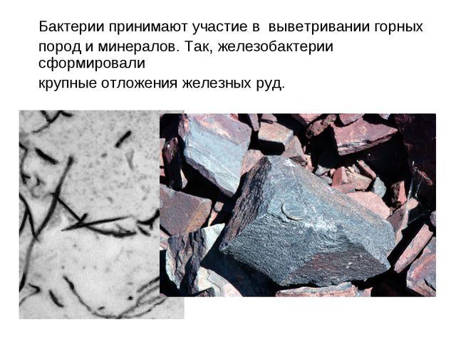 Бактерии принимают участие в выветривании горных пород и минералов. Так, желе...
