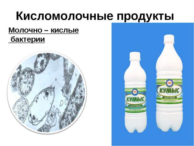 Кисломолочные продукты Молочно – кислые бактерии