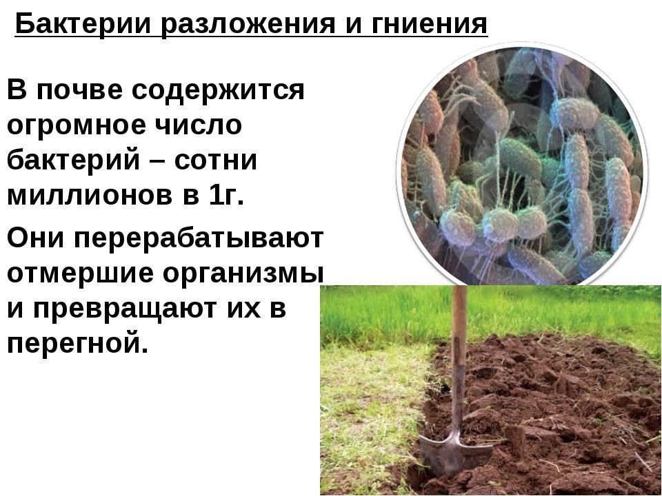В почве содержится огромное число бактерий – сотни миллионов в 1г. Они перера...